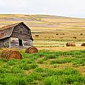 Twisted Barn On Canadian Prairie, Big by Ken Gillespie