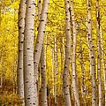 Twisted In Yellow by Mitch Johanson