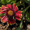 Twisted Petals by Jo-Anne Gazo-McKim
