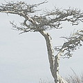 Twisted Tree 2 by Kathy Barney