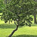 Twisted Tree by Brenda Hackett