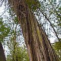 Twisted Tree by Hilary Slater