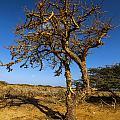 Twisted Tree by Jess Kraft