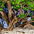 Twisted Trunks by Judy Wolinsky