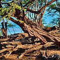 Twisting Trees by Omaste Witkowski