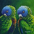 Two - St Lucia Parrots by Christopher Cox