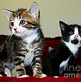 Two Adorable Kittens by Terri Waters