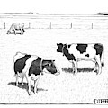 Two Spotted Cows Looking At A Jersey Cow by Matthew Diffee