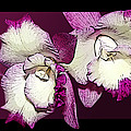 Two Baby Orchids by Phyllis Denton