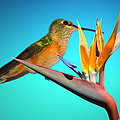 Two Birds Of Paradise by Joyce Dickens