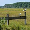 Two Birds On A Fence by Doug Kline