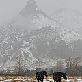 Two Black Horses In The Snow   #7983 by J L Woody Wooden