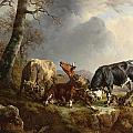 Two Bulls Defend Against A Cow Attacked By Wolves by Jacques Raymond Brascassat