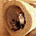Two Cats In A Condo by Jussta Jussta