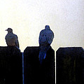 Two Doves On A Fence by Eric Forster