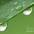 Two Droplets by Roman Milert