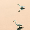 Two Egrets by Don Johnson