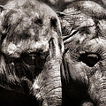 Two Elephants by Blake Richards
