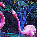Two Flamingos by Jane Schnetlage