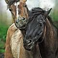 Two Friends by Angel Ciesniarska