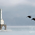 Two Geese Cleared For Landing by Eric Curtin