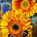 Two Golden Mums With Butterfly by Garry Gay