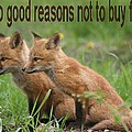 Two Good Reasons Not To Buy Fur by Doris Potter