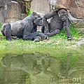 Two Gorillas Relaxing II by Jim Fitzpatrick
