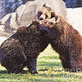 Two Grizzly Bears Ursus Arctos Play Fighting by Liz Leyden