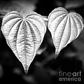 Two Hearts by Chris Scroggins