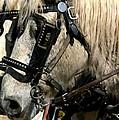 Two Horse Power by Joe Kozlowski