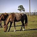 Two Horses by Fran Gallogly