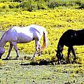 Two Horses Grazing by Genia Gartner