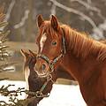 Two Horses In Winter Day by Jaroslav Frank