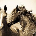 Two Horses by Lana Enderle