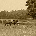 Two Horses by Minnie Davis