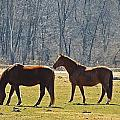 Two Horses by MTBobbins Photography