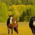 Two Horses Walking Along by Jeff Swan