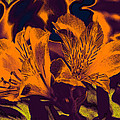 Two Lilies Gradient Ink Outline by Linda Brody
