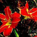 Two Lilies by Lizi Beard-Ward