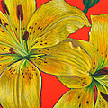 Da128 Two Lillies By Daniel Adams by Daniel Adams