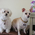 Two Little Dog by Lorna Maza
