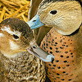 Two Little Ducks by Mair Hunt