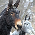 Two Mules For Sister Sara by Bonfire Photography
