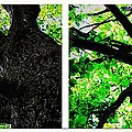 Two Old Trees by Barbara Griffin