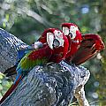 Two On A Branch Two by Ken Frischkorn