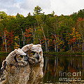 Two Owlets At A Lakeshore by Les Palenik