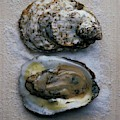 Two Oysters by Romulo Yanes