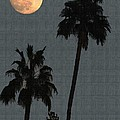 Two Palms And The Moon by Tom Janca