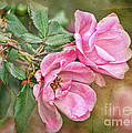 Two Pink Roses I  Blank Greeting Card by Debbie Portwood